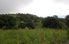 Small-scale, biodiverse agriculture for multiple services in Togue, Guinea. (Photo by Stephen Wood)