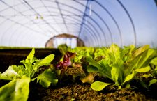 How the Next Farm Bill Will Hurt Sustainable Agriculture – and Help Industrial Farms