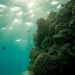 Sage Briefs: Wrong Place, Wrong Clime–Will Marine Sanctuaries Falter as Temperatures Rise?