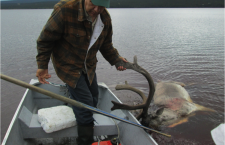 Perspectives from the People's Land: If the Caribou Help Us