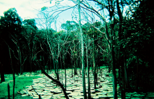 When a Tree Falls in the Amazon