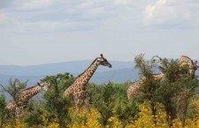 Tess Croner in Rwanda, part 3