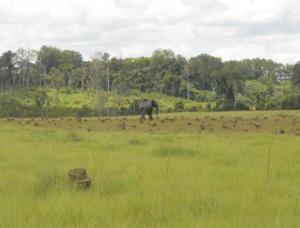 Peter Umunay in Gabon