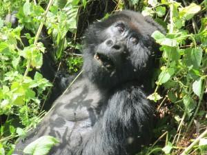 Tess Croner in Rwanda, part 4