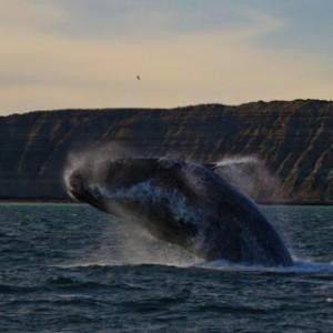 WhaleSquare
