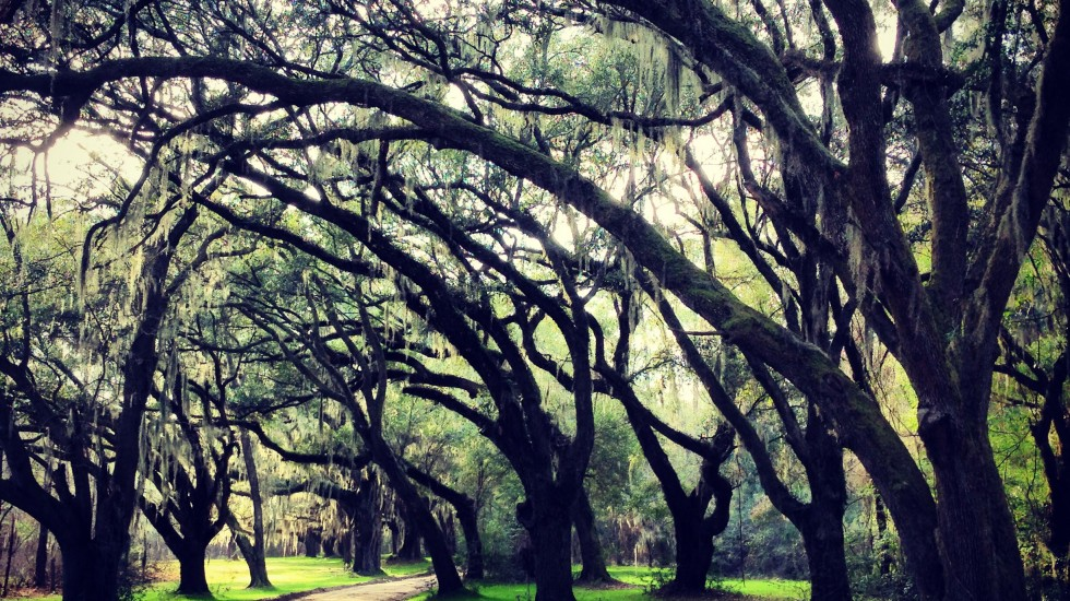 Explorations: South Carolina Lowcountry