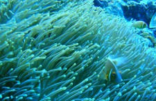 Explorations: Palau