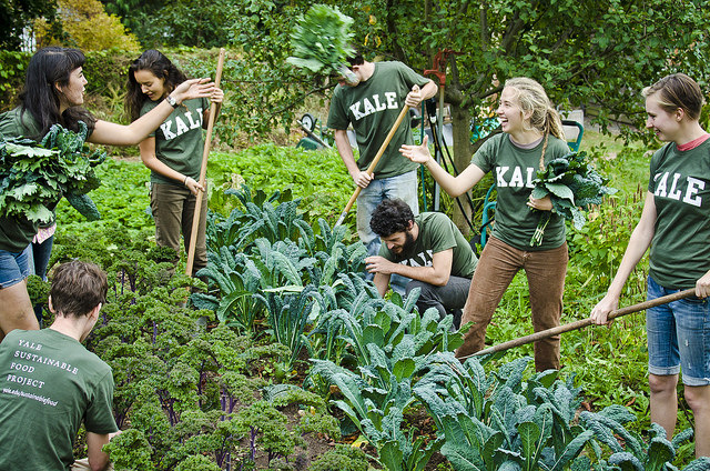 English majors harvest kale alongside architecture students. Photo by Philipp Arndt.