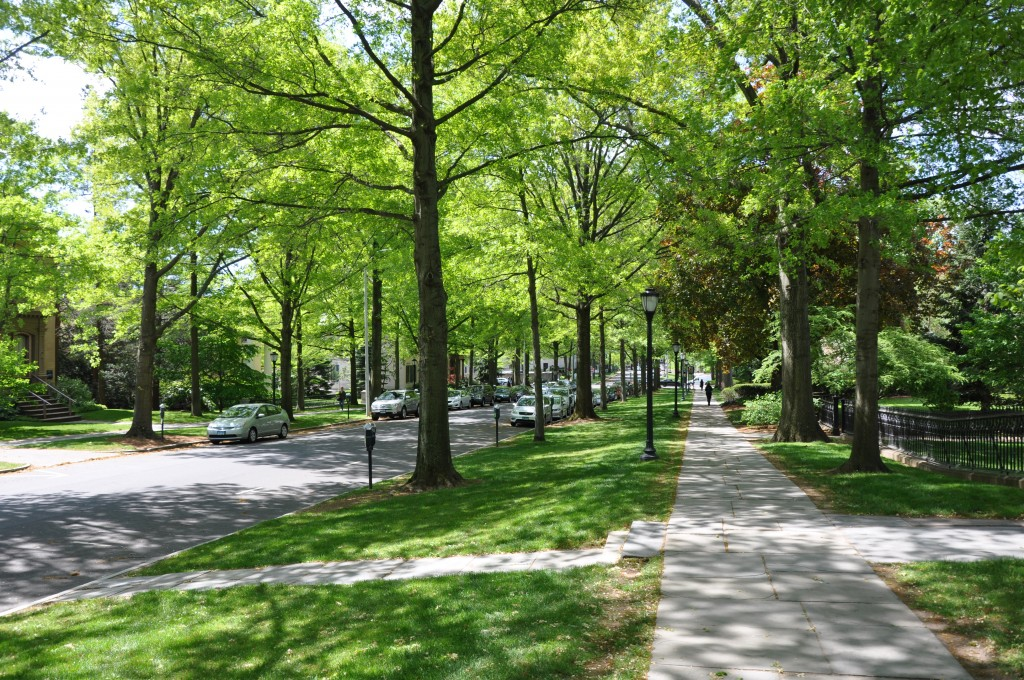Street trees, like these on Hillhouse Avenue, may play a part in crime reduction in New Haven, Connecticut. Photo credit: Greg Nielsen.