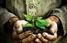 Why We Plant Trees