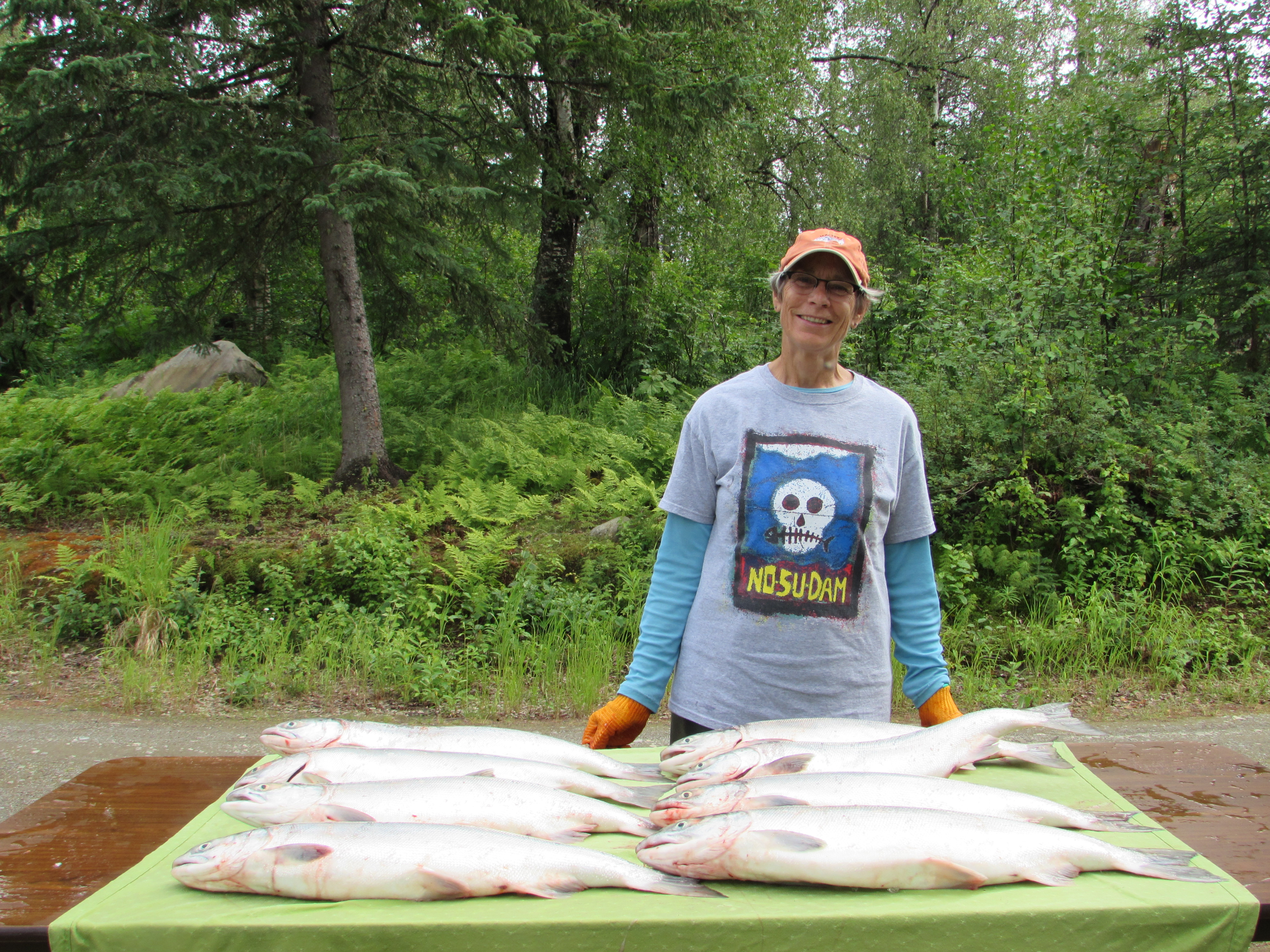 Talkeetna resident Diane Okonek sports a No Su Dam shirt as she gets ready to process sockeye salmon from the Susitna River.