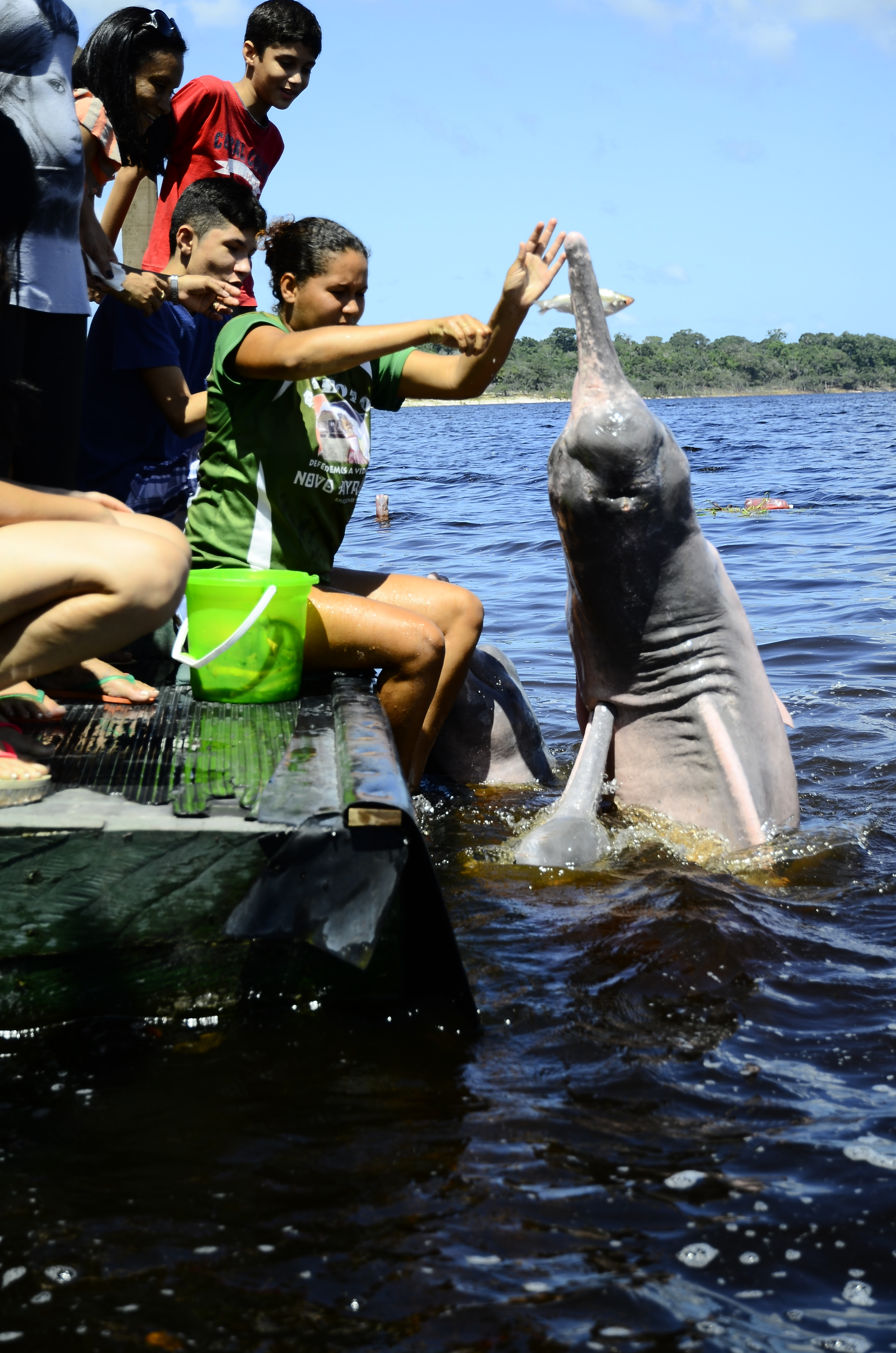 One pink river dolphin threw almost its entire body in the air.