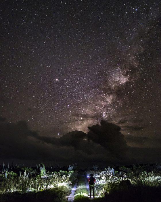 Below The Stars A Hiker Lights View Of Xerophytic Vegetation Surrounding Mona Lighthouse Trail Isla De Nature Reserve Puerto Rico