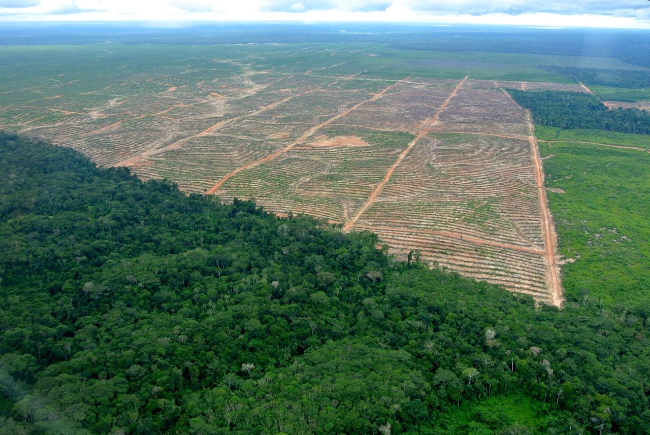 Aerial view of Plantaciones de Pucallpa SAC.