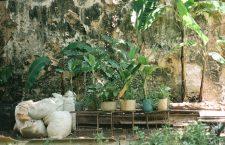 San Isidro, Havana, Cuba