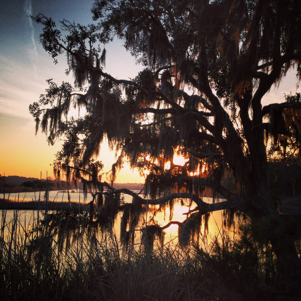 Live Oak in Santee Coastal Reserve near McClellanville, South Carolina