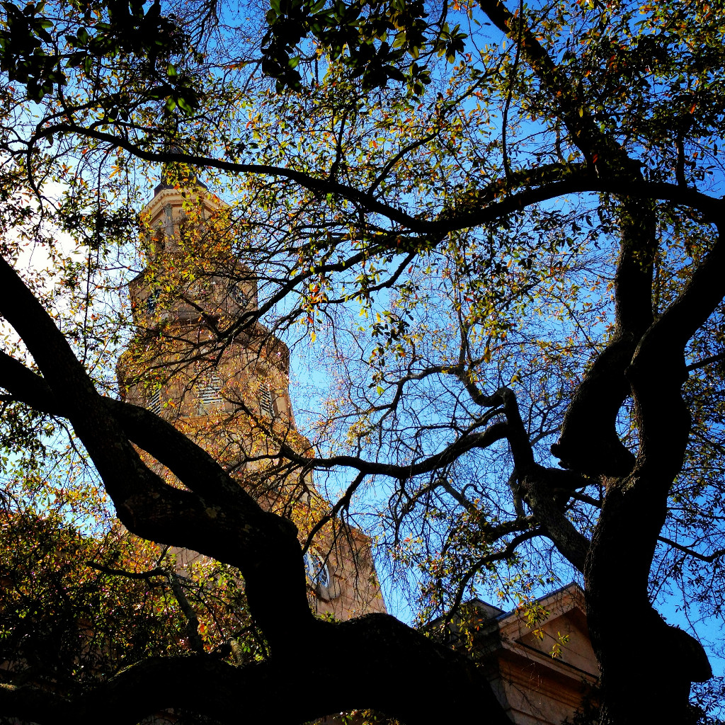 Live Oak and St. Philips Church in Charleston, South Carolina