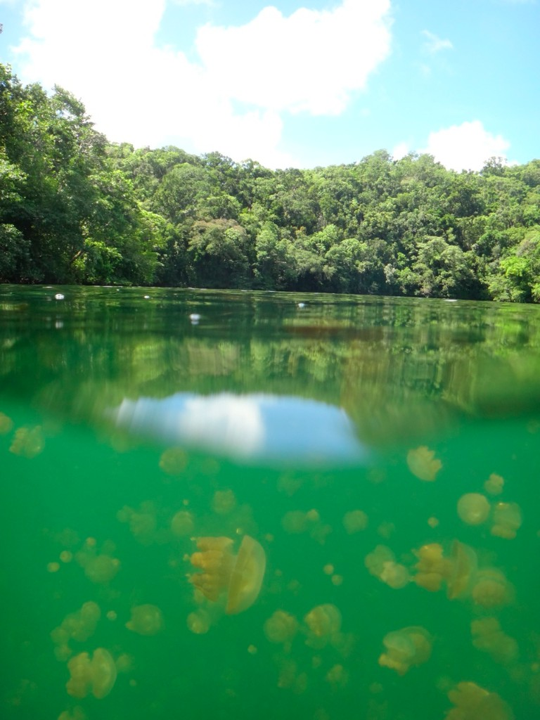 Jellyfish Lake, a tourist magnet for a reason