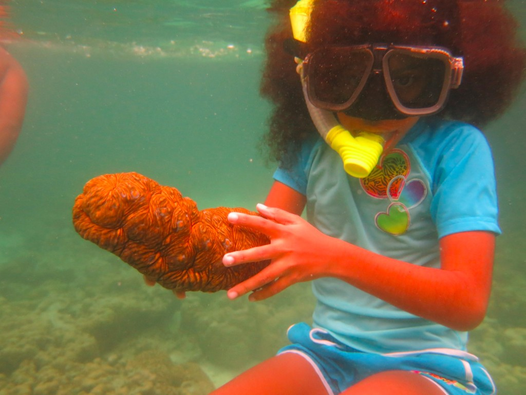 Show and tell sea cucumbers